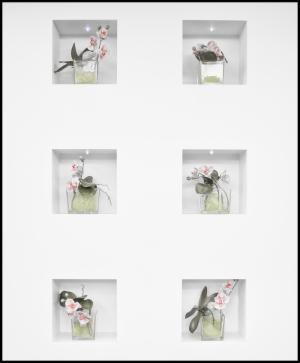 Website-L1208215-#moments #color #orchids #hansmartindoelz